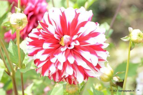 attractive flowers ~ @ Kodaikanal flower show 2019