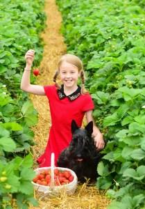 News: Scotty Brand Strawberries go Nationwide