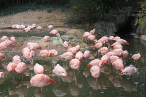 POEM: Animal Observations