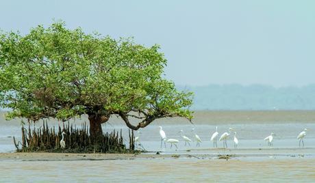 coringa-wildlife