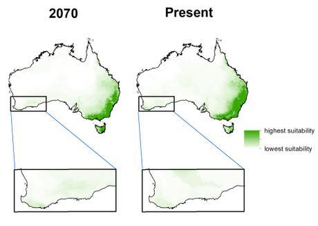Koala extinctions past, present, and future