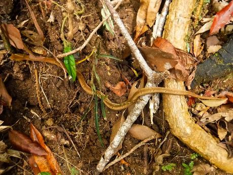 Brown snake. Can you see it?