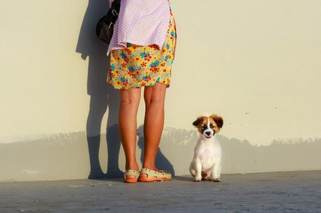 Travelling with Pets in India? Read on to know how.