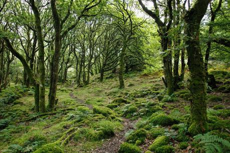 Wooded area with mossy path