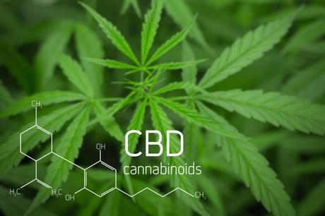 Tapping Into The Surge In Popularity Of CBD Products