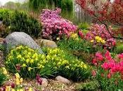 Tips Using Color Your Garden