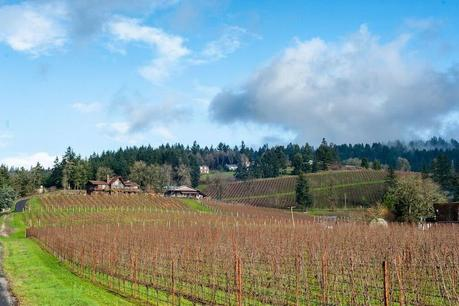 Vidon Vineyard is located on Chehalem Mountain in Oregon's Willamette Valley.
