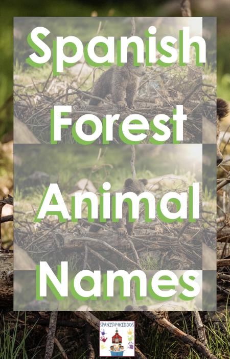 Forest Animal Names in Spanish
