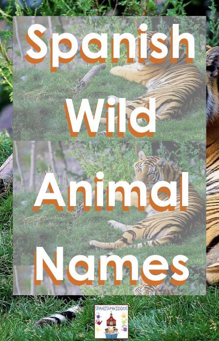 Wild Animal Names in Spanish