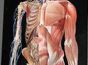 BMI: Biomarker Longevity Health
