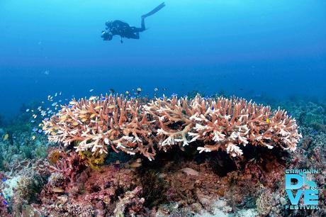 Amazing underwater world