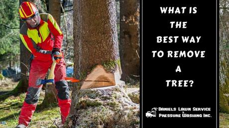 The Best Way To Remove a Tree