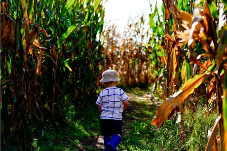 5 Ways to Maintain Your Corn Maze