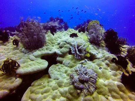 Corals, crinoids, and Christmas tree worms