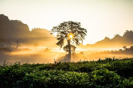 dawn-tree-bright-morning-nature-tree