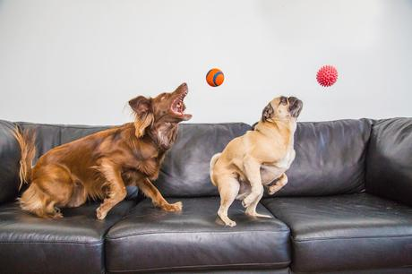 #Photos Go fetch #Dogs catching balls