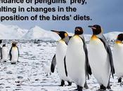 #ClimateFacts Series: #ClimateChange #Science #Penguins #Antarctica