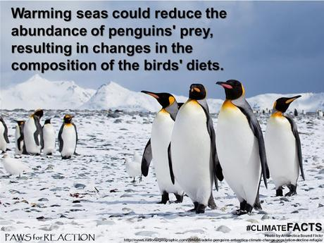 #ClimateFacts series: #ClimateChange #Science #Penguins in #Antarctica