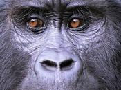 Encounter Gorillas Wildlife Amazing Uganda Tour