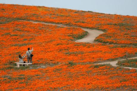 The 10 Best U.S. Spring Flower Festivals