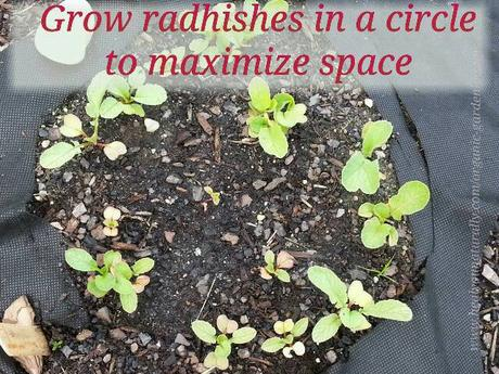 Growing A Vegetable Garden in a Circle to Maximize Space. Brilliant!