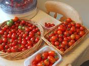 Tomato Report