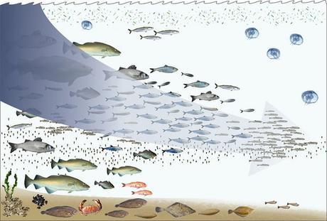 fishing-down-the-foodweb-overfishing