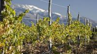 Extreme Viticulture: Bodega Colomé's Altura Maxima Vineyard