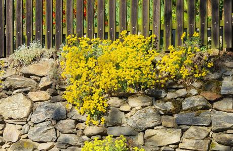 What Is a Ground Cover Plant?