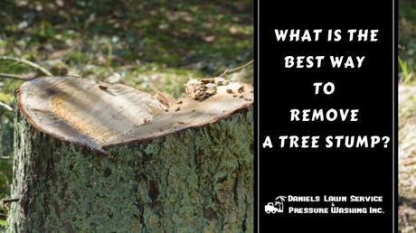 What is the Best Way to Remove a Tree Stump ?