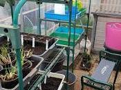 2019 Spring Sowing Starts