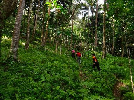 Going up Mt. Hibok-hibok