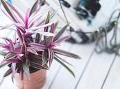 Benefits Having Indoor Plants