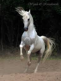 Four legs good - Horses