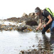 3. Join a foraging fortnight event (31stAugust – 15thSeptember)