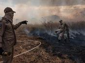 After Being Accused Overlooking Illegal Deforestation, Bolsonaro Sends 44000 Troops Amazon Fires Damage Control