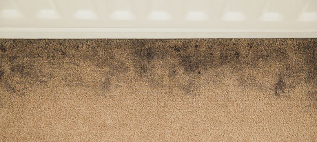 10 tips from Pros to Spot Bad Carpet Cleaning Services in 2019