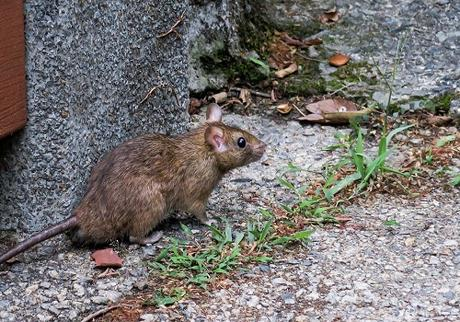 3 Things Rodents Love About Your House & How To Make It Less Appealing