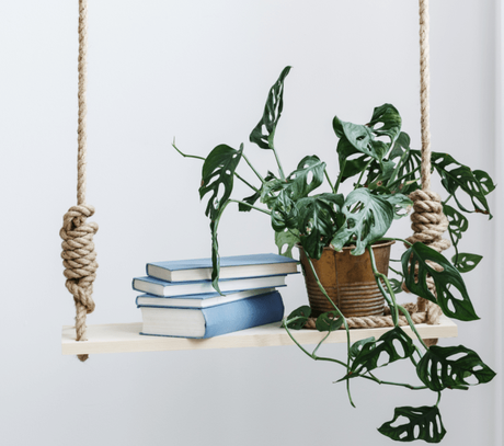 Breathe Life into your homes: Indoor plants in home décor