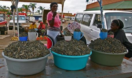Expat Foodie: Wild for Worms