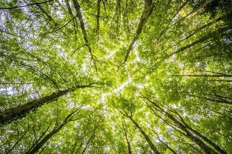 worms-eyeview-of-green-trees-forests