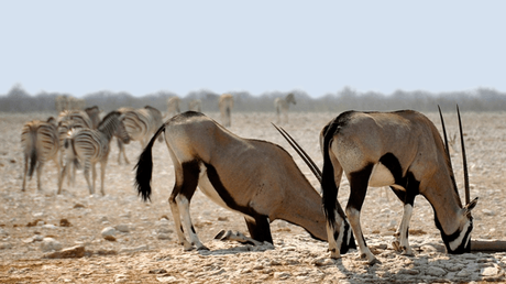Backpacking in Namibia – The Ultimate Safari Destination