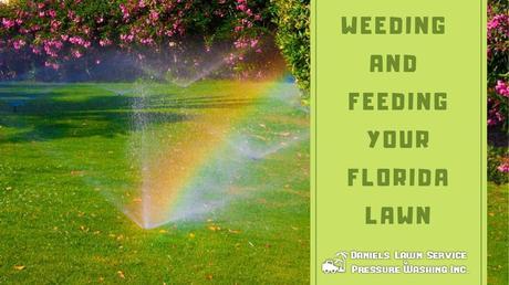 Weeding and Feeding Your Florida Lawn