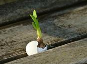 Resurrection Reason