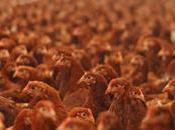 Poultry Waste Incineration: Versus Around Globe