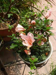 Flower Power Time