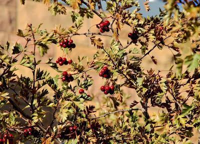 Treefollowing, Literary Art & Wyoming Coal