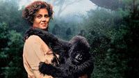 Oscar Got It Wrong!: Best Adapted Screenplay 1988