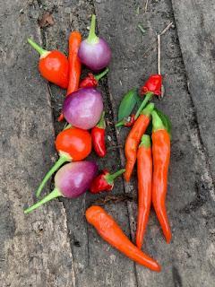 The vegetable garden - October update
