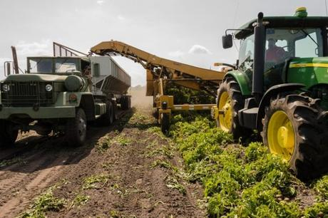 Seven Advantages Of Hiring An Agricultural Specialist